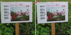 100531shimotsuma03