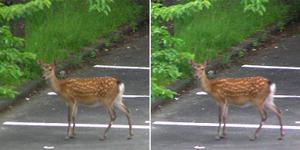 100617takeda_deer